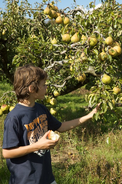 Picking fruit at Elwell Farm