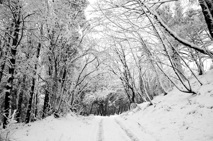 Winter woods in West Dorset