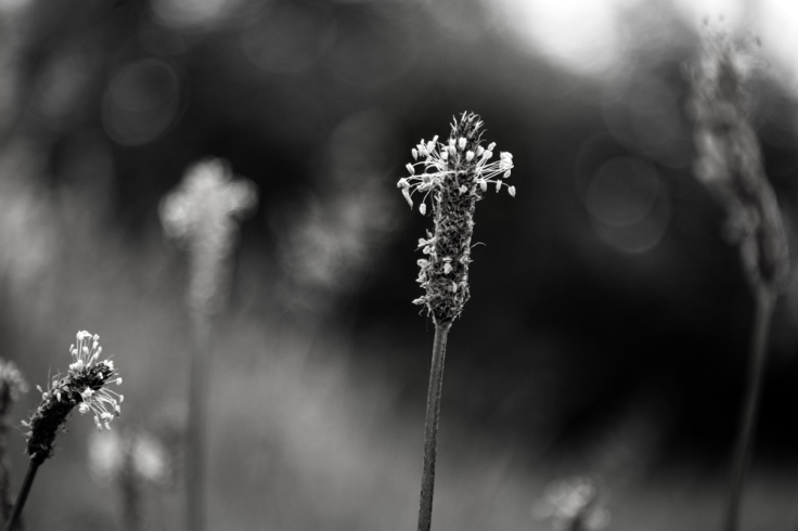 Grasses and weeds series