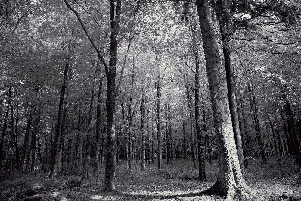 Hooke Woods